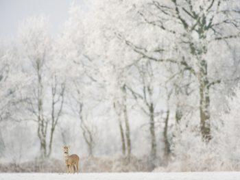 Foto's gemaakt door: Klaas Koopmans / Marcel van Kammen