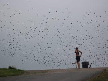 Foto's gemaakt door: Waddenvereniging/Bas Bijl
